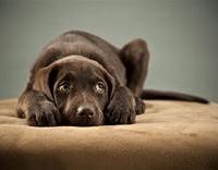 An anxious dog