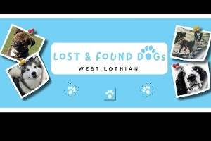 Lost and Found Dogs West Lothian  description