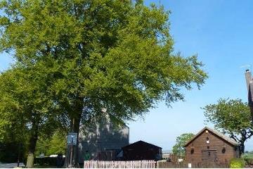 Torphichen tree