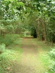 Polkemmet - Barracks Wood