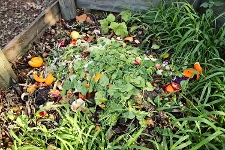 Compost Heap - Food Waste