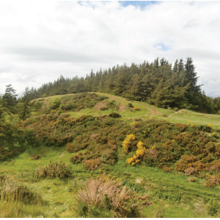 Ravencraig Woodland