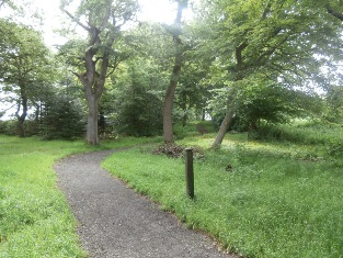 Hillhouse Woodland