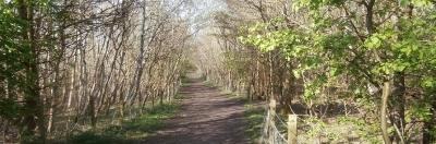 Walks in West Lothian banner