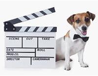Dog actor
