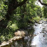31 Carribber Glen on the River Avon near Linlithgow
