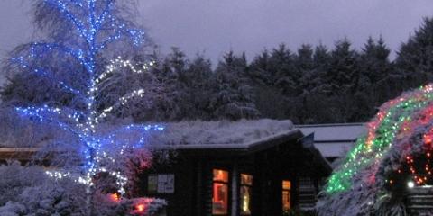Beecraigs Christmas Trees Image